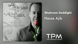 Shahram Seddighi