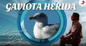 Gaviota Herida Music Video