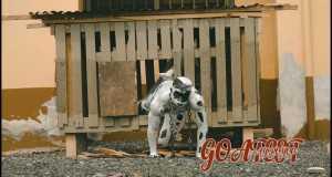 Goatest