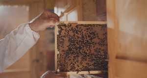 Čebelarska Pesem
