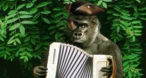 Harambe The Pirate Gorilla